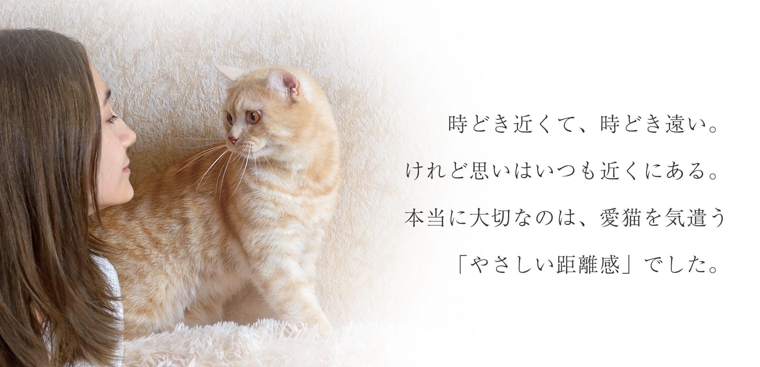 時どき近くて、時どき遠い。けれど思いはいつも近くにある。本当に大切なのは、愛猫を気遣う「やさしい距離感」でした。